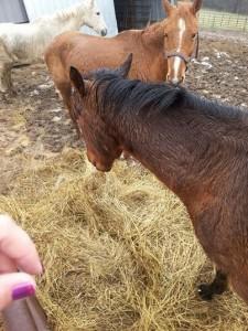 horse_rescue